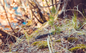 Wallpaper spring, grass, tree, snake, moss, branch, nature, grace, branch, macro, juniper, forest, snakes, tree, leaves, ...