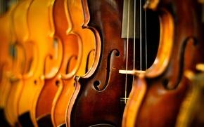 Picture macro, music, Violins