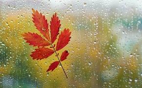 Picture autumn, glass, drops, macro, sheet, rain, window