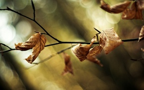 Wallpaper leaves, macro, trees, background, tree, widescreen, Wallpaper, blur, branch, wallpaper, leaves, trees, widescreen, background, leaves, ...
