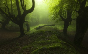 Picture grass, trees, landscape, nature, leaves, sunlight, trunk, mist, moss, Forest, soft light, dead tree