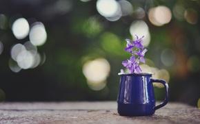 Picture flower, purple, glare, mug