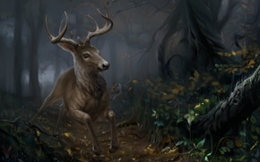Picture forest, nature, deer, by SalamanDra-S