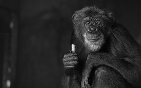 Picture nature, Monkey, black and white