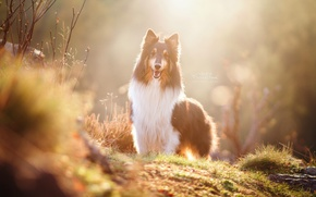 Picture autumn, look, light, each, dog