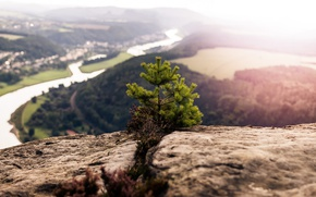 Picture rock, river, mountain, valley, top, sunlight, pine