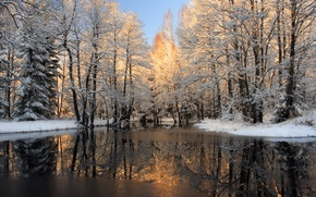 Wallpaper water, snow, winter, photo, nature, trees, ice