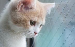 Picture Hannah, © Benjamin Torode, kitty