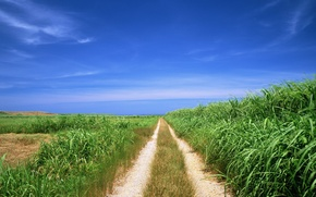 Wallpaper road, the way, field