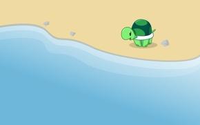 Picture turtle, sea. shore