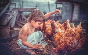 Picture birds, children, mood, grain, boy, yard, care, food, chicken, sheds, Wallpaper from lolita777