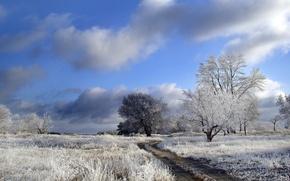 Wallpaper winter, road, field, trees