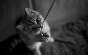 Picture cat, mustache, black and white, look, thread, kitty, kitty, muzzle, legs, cat