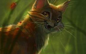 Picture cat, nature, Rowan, by Vao-Ra