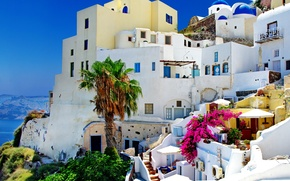 Picture nature, palm trees, home, Santorini, Greece, Santorini, Oia, Greece