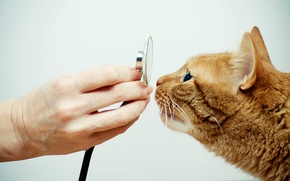 Picture cat, feline, veterinarian