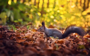 Picture autumn, leaves, protein, bokeh