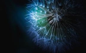 Picture white, flower, light, dandelion, green, white, flower, blue, macro, purple, soft, dreamy, seed, fine art, ...