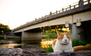 Picture cat, sunset, bridge