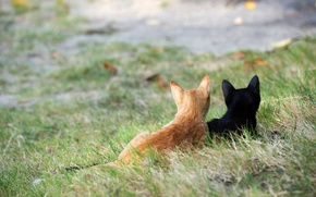 Picture grass, cats, street, black, red, kittens, attention