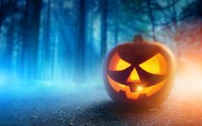 Picture autumn, forest, night, Halloween, pumpkin, Halloween, smile, face, holiday, pumpkin