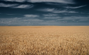 Picture field, the sky, clouds, horizon, ears