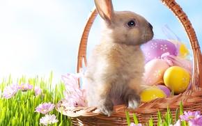 Wallpaper Flowers, eggs, Easter, grass, Easter, Holidays