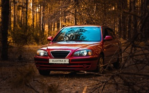 Picture car, red, forest, hyundai, korea, elantra, gls