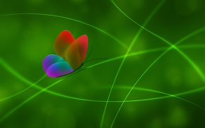 Wallpaper color, Butterfly, green, line