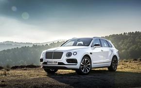 Wallpaper Bentley, Bentayga, Bentley, crossover