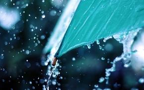 Picture water, macro, photo, rain, umbrella