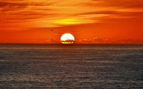 Picture sea, the sky, the sun, clouds, sunset, bird