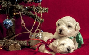 Picture animals, dogs, balls, tape, holiday, balls, toy, new year, puppies, pair, tree, light bulb, bows, …