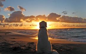 Picture Sunset, Sea, Beach, Dog, Dog