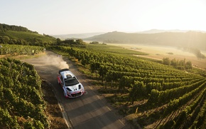Picture Dust, Hyundai, Germany, WRC, Rally, The front, i20, The vineyards
