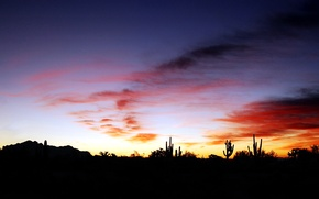 Picture the sky, clouds, sunset, cactus, horizon, silhouette, glow