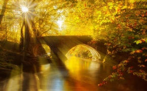 Picture bridge, Park, river, hdr, leaves, fall, leaves, reflection, trees, water, walk, alley, river, autumn, forest, ...