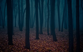 Wallpaper dark forest, the trunks of the trees, leaves