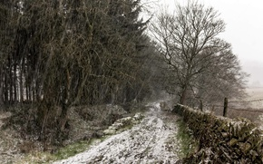 Picture Tree, Snow, England, United Kingdom, Snowy track, Holme
