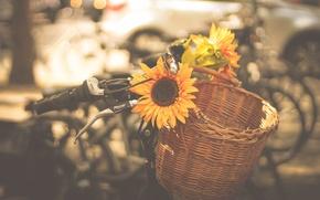 Picture machine, bike, the city, basket, sunflower, bikes, horn