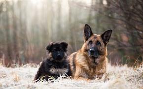 Wallpaper dogs, nature, friends