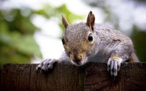 Picture animals, protein, animals, squirrel
