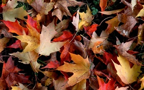 Picture autumn, leaves, yellow, red, foliage, fallen