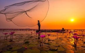 Picture flowers, lake, network, Thailand, fishermen, pink Lotus
