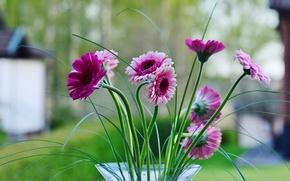 Picture leaves, flowers, petals, vase