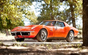 Picture trees, orange, Corvette, Chevrolet, 1969, Chevrolet, classic, the front, Corvette, stingrey, Stingray