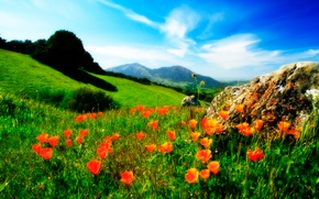 Picture the sky, grass, flowers, mountains, Maki, meadow