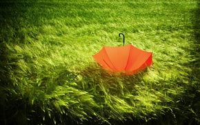 Picture nature, green, umbrella, ears