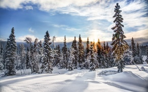 Picture snow, winter, trees, Norway, Trysil, Trysil, ate, Norway, forest