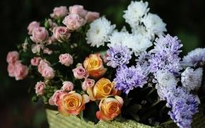 Picture roses, buds, chrysanthemum, © Elena Di Guardo